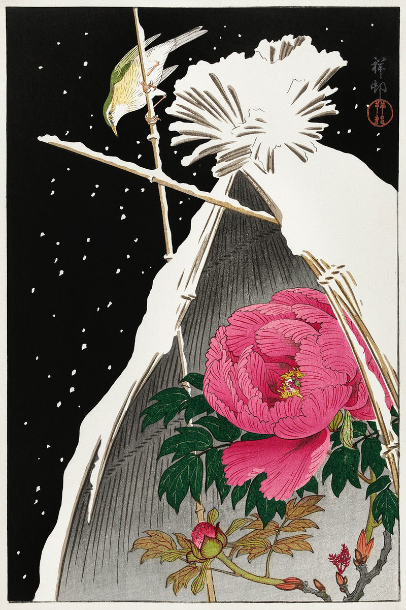 Koson Ohara Siberian Bluechat above a Flowering Peony Shelter (c.1900) Colour woodblock print Private collection