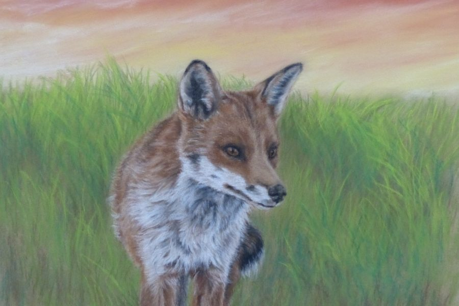 Anita Young –Drawing Inspiration From The Fox
