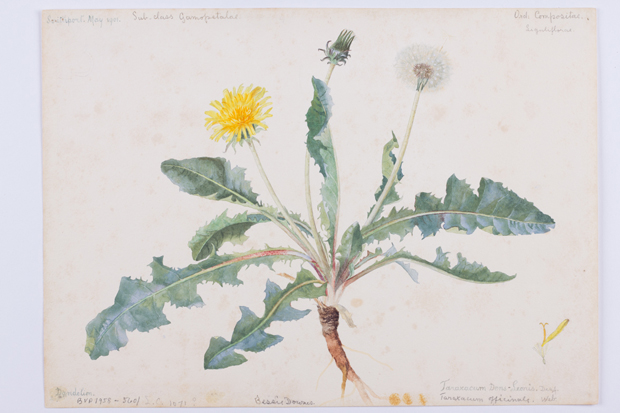 Bessie Downes – Flowers of the Southport Coast