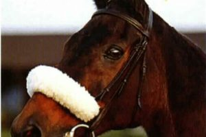 Red Rum – Share your stories